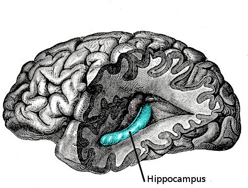 Naukowcy odkryli mechanizm, który pomaga nam tłumić niechciane myśli i wspomnienia