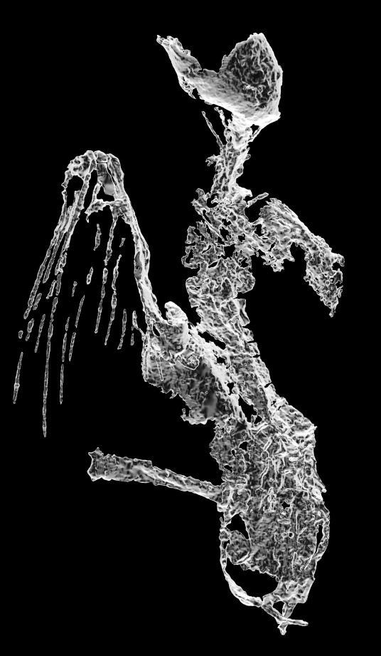 To pisklę ptaka uwięzionego w bursztynie ma ponad 99 milionów lat