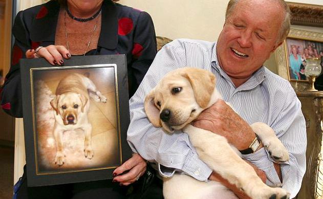 Koreańska firma oferuje usługę sklonowania zmarłego psa. Klientów z ukochanymi pupilami nie brakuje