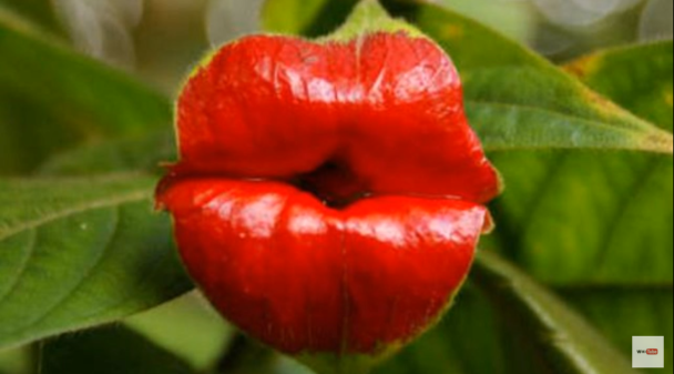 10 dziwacznych roślin, które do złudzenia przypominają ludzkie organy