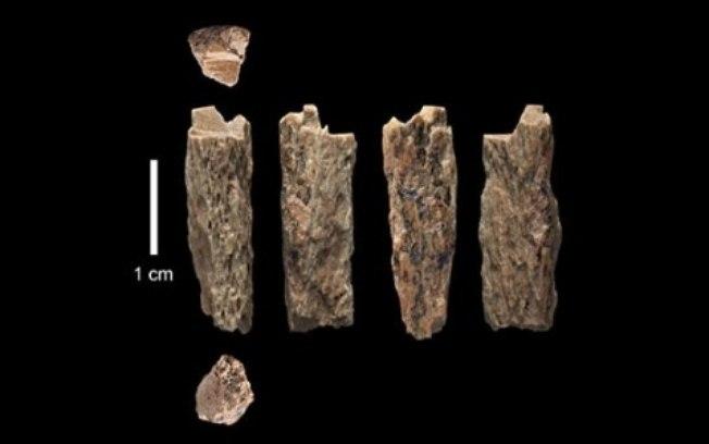 Szczątki dziewczynki ujawniają, że jej rodzicami byli przedstawiciele dwóch różnych gatunków