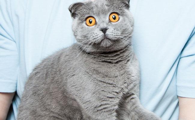 Nowa Zelandia rozważa zakaz posiadania kotów. Choć w szczytnym celu, plan jest po prostu podły