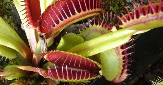Rośliny po zaaplikowaniu narkozy zaczynają się naprawdę dziwnie zachowywać