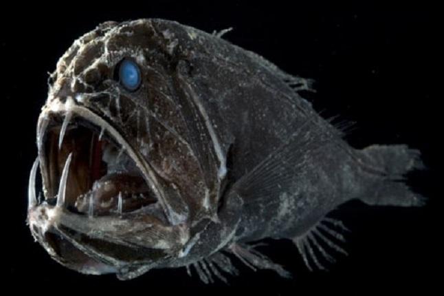 10 przerażających podwodnych stworzeń, które czają się w głębinach oceanu. Są naprawdę potworne