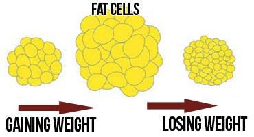 Jak nasze ciało spala tłuszcz i dlaczego niektórym tak trudno jest zrzucić nadmiar kilogramów?