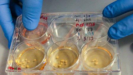 Naukowcy wyhodowali mini-mózgi, których wzorce do złudzenia przypominają aktywność u wcześniaków