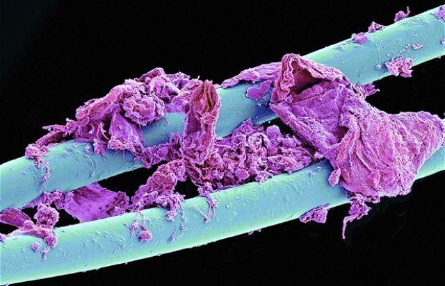 Ukryty świat pod mikroskopem. Większość z tych rzeczy znajduje się w twoim najbliższym otoczeniu