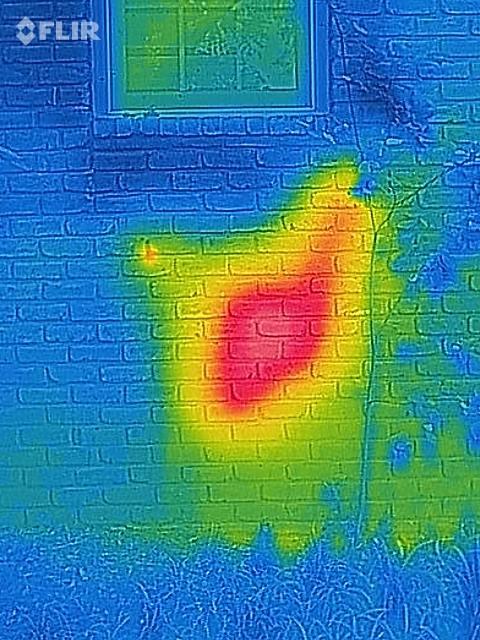 Zaklinacz Pszczół pokazał gniazdo ukryte w ścianie domu i proces usuwania. Absolutnie niewiarygodne