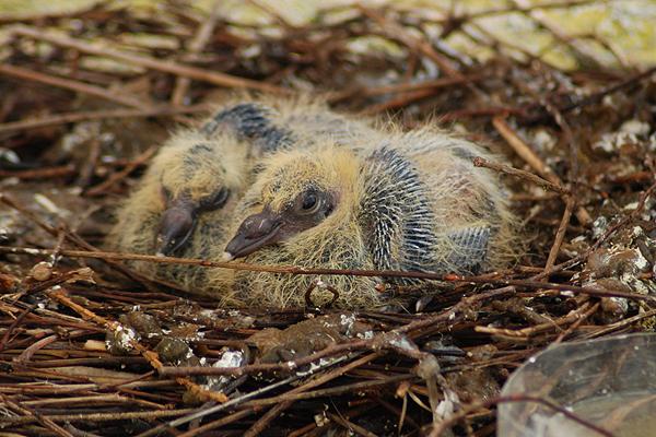 20 gatunków zwierząt, który zapewne nie widziałeś zaraz po narodzinach