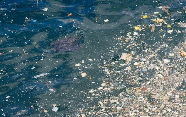 Szokujące badanie ujawniło zatrucie plastikiem u zwierząt wyrzuconych na brytyjski brzeg