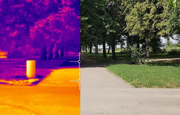 Drzewa w mieście są naprawdę niezbędne. Dzięki nim różnica jest ogromna