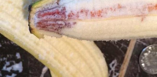 grzyb atakuje banany
