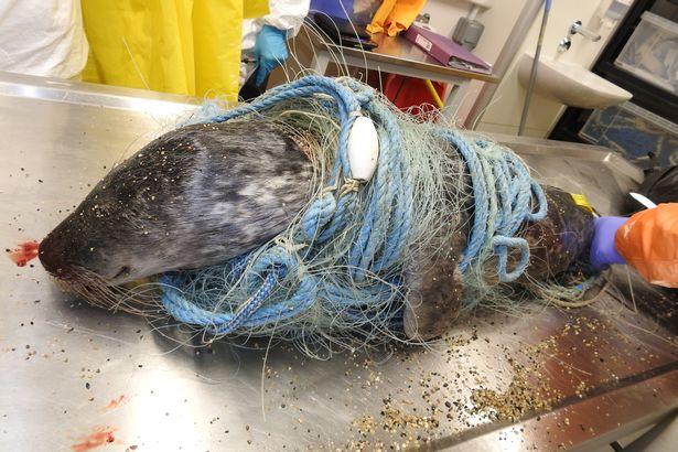 Dramatyczne zdjęcia pokazują fatalne skutki niektórych aspektów rybołówstwa