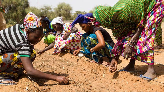 Wielki Zielony Mur powstaje w Afryce. Będzie największą żywą strukturą na naszej planecie