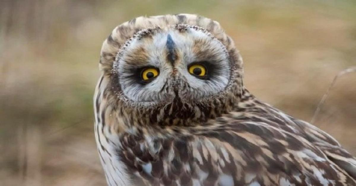 Widzieliście kiedyś sowę bez piór? Widok tych ptaków pozbawionych upierzenia totalnie was zaskoczy
