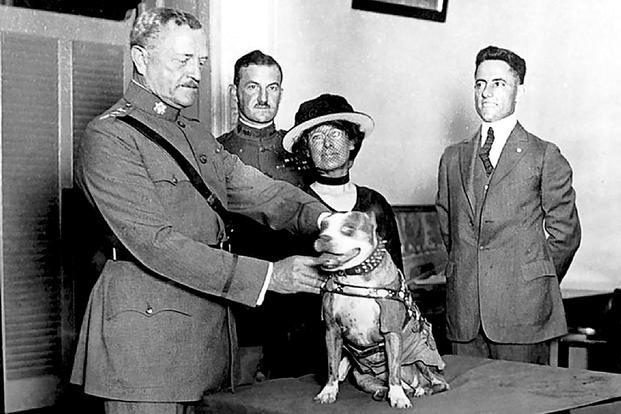 Sierżant Stubby, bezpański pies, który został bohaterem podczas I wojny światowej