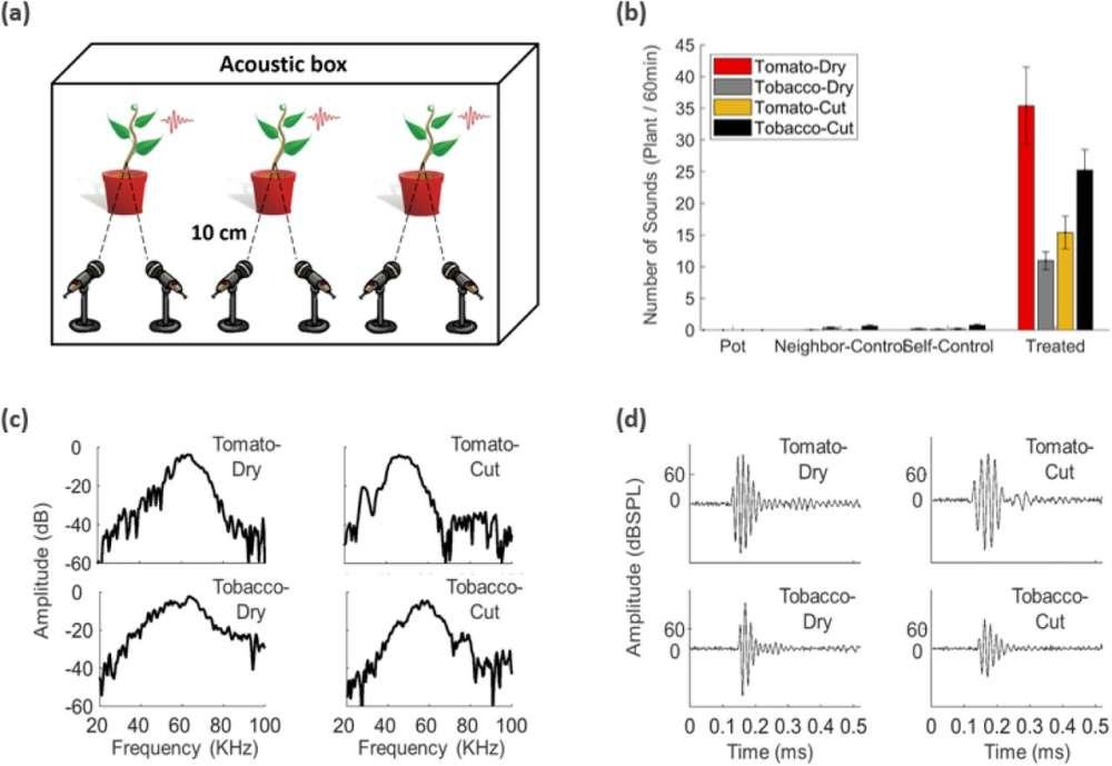 Rośliny mogą się stresować i wydawać ultradźwięki niesłyszalne dla ludzkiego ucha