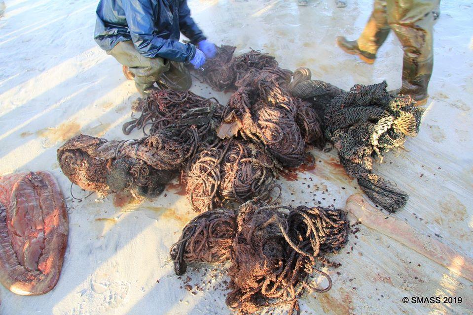 Martwy waleń został znaleziony na szkockim wybrzeżu. W żołądku miał ponad 100 kilogramów śmieci