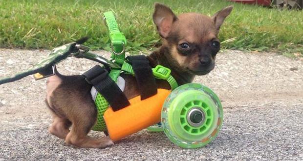7 zwierzaków, którym drukarki 3D pomogły zyskać drugie życie. Protezy przywróciły im zdrowie