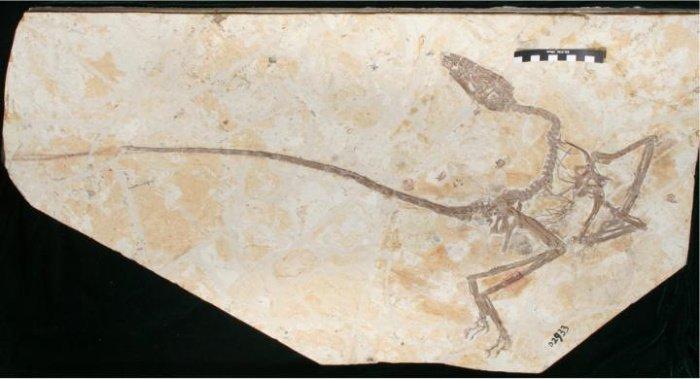 Niesamowita skamielina sprzed 120 milionów lat ujawnia ważne cechy dinozaurów pierzastych