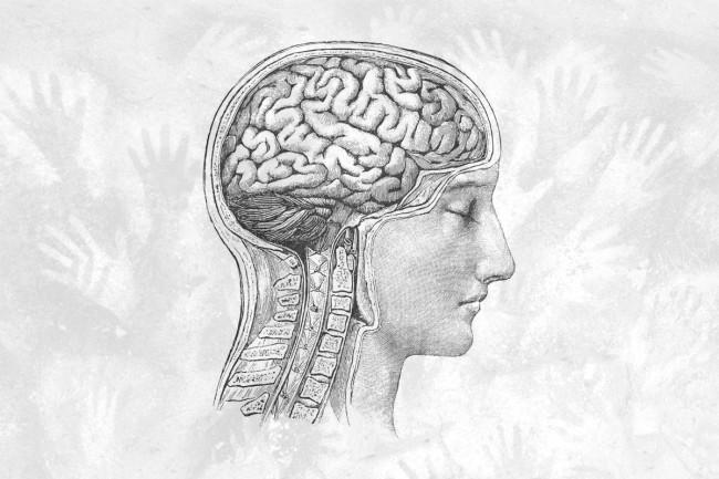 Naukowcy odkryli nowy sygnał w ludzkim mózgu. Może wyjaśniać, dlaczego jesteśmy tak wyjątkowi