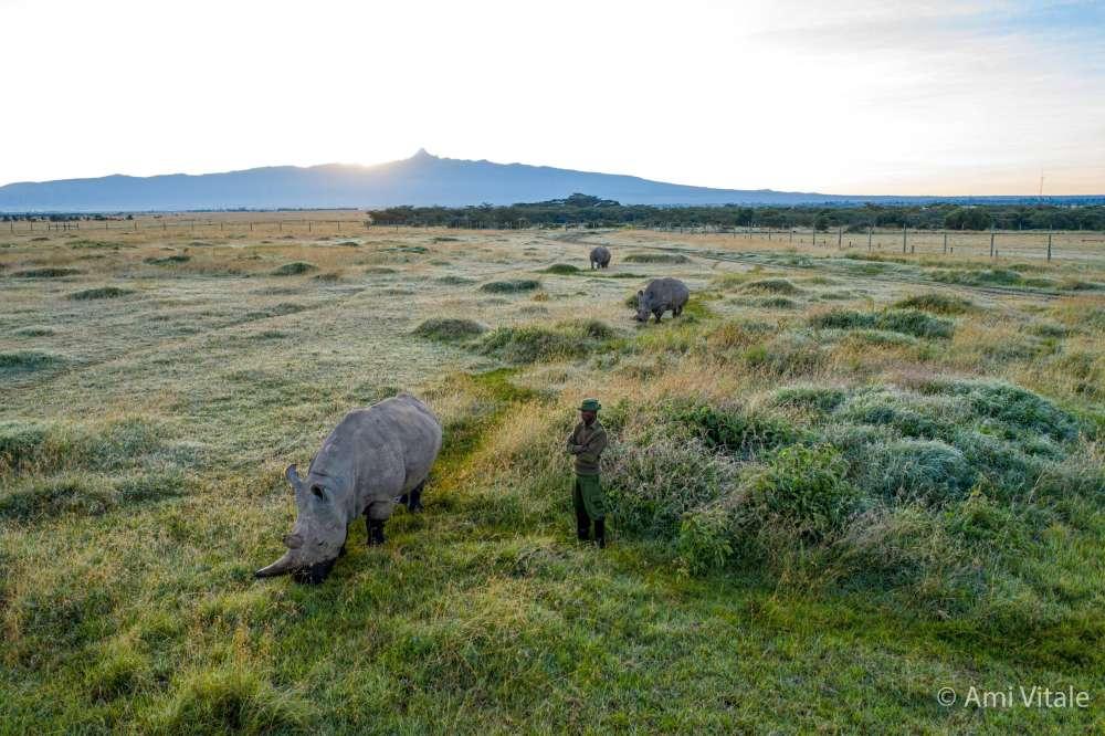 Pojawiła się kolejna szansa na ocalenie białego nosorożca północnego przed wyginięciem
