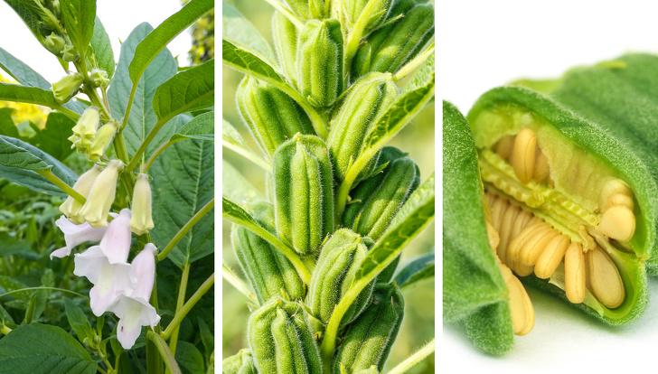 10 produktów spożywczych, które znasz ze sklepowych półek, ale nie poznałbyś ich w naturze