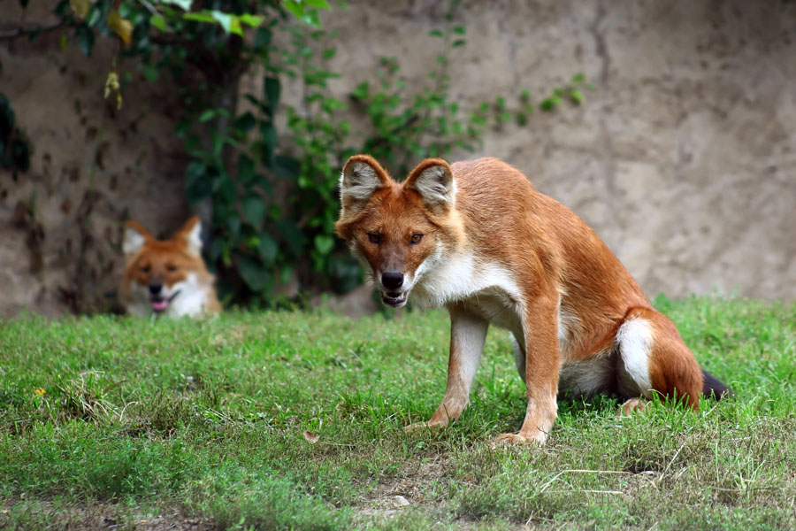15 zwierząt, o których istnieniu nie miałeś pojęcia. Wygląd tych stworzeń jest absolutnie unikalny