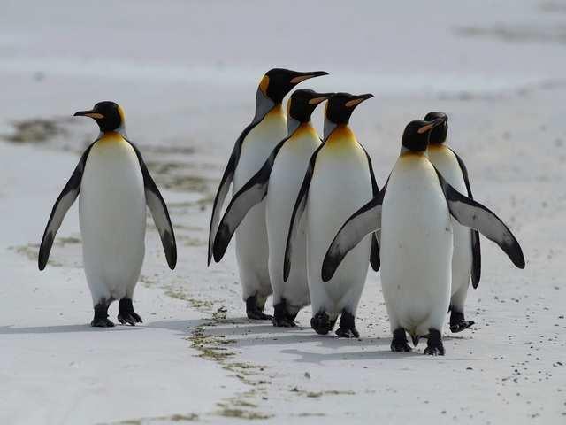 Purpurowy staw na Antarktydzie zadziwił zespół badawczy. Zagadkę szybko udało się rozwiązać