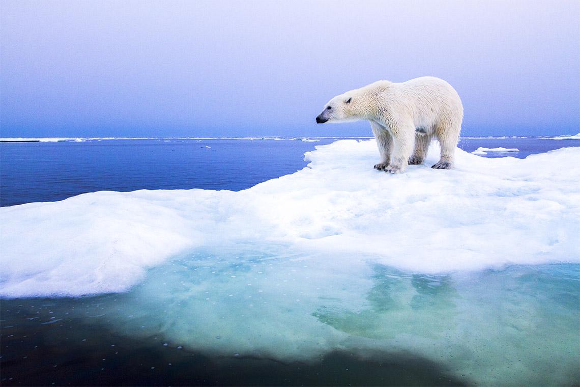 Nowe badanie sugeruje, że przed 2050 rokiem Arktyka latem będzie pozbawiona lodu