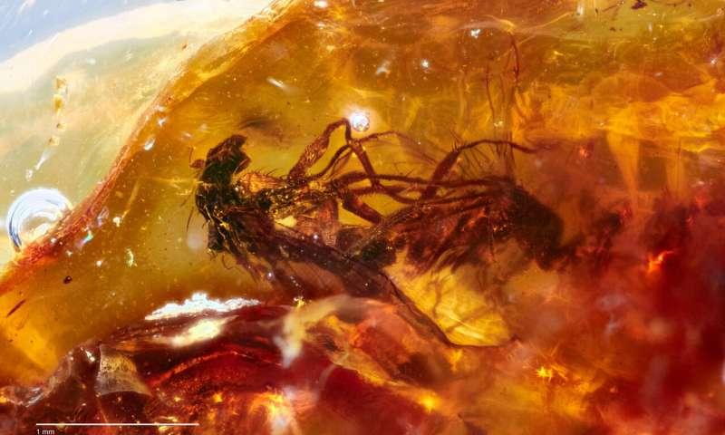 Naukowcy znaleźli dwie kopulujące muchy, które zostały uwięzione w bursztynie 40 milionów lat temu