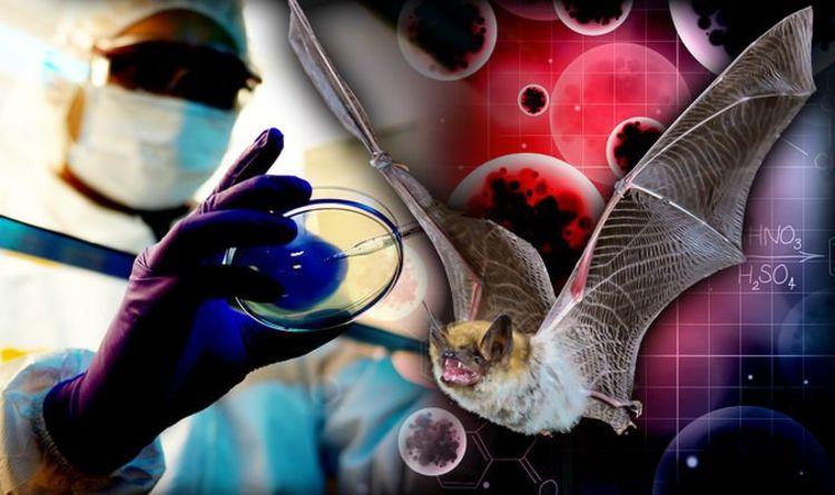 Skąd właściwie wzięły się koronawirusy i dlaczego jeszcze nie zostały eradykowane?