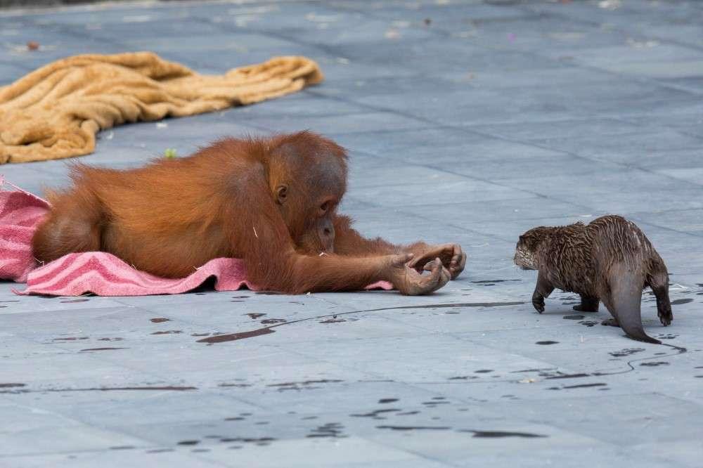 międzygatunkowa przyjaźń