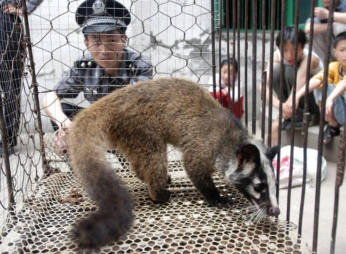 Rynek Huanan w Wuhan może wcale nie być źródłem pandemii COVID-19