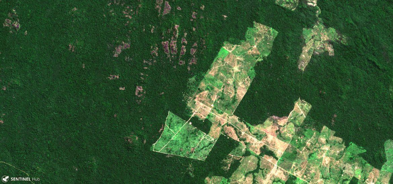 Ekolodzy ostrzegają, że lasy deszczowe Amazonii mogą być kolejnym źródłem koronawirusa