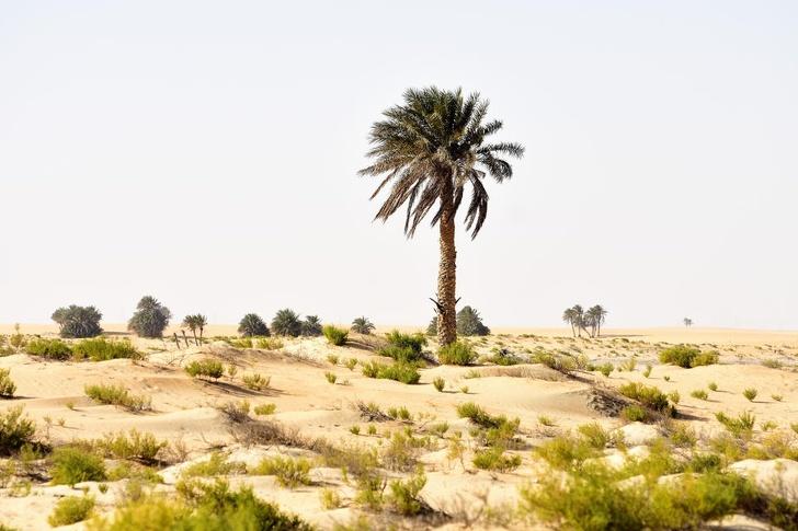 20 fenomenalnych zdjęć drzew, których pragnienie życia jest tak silne, że przetrwają wszystko