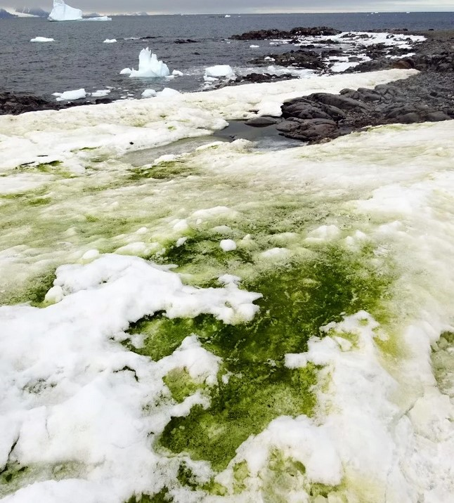 Zmiany klimatu sprawiły, że część Antarktydy stała się zielona. Nie, nie jest to jednak trawa