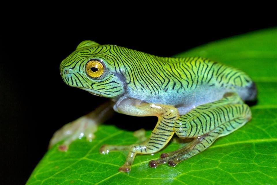 21 egzotycznych stworzeń o bajecznym ubarwieniu i naprawdę osobliwym wyglądzie