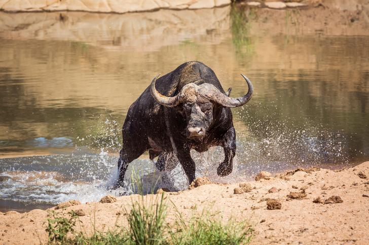 15 mało przyjemnych faktów ze świata zwierząt. Niektóre stworzenia są przerażające