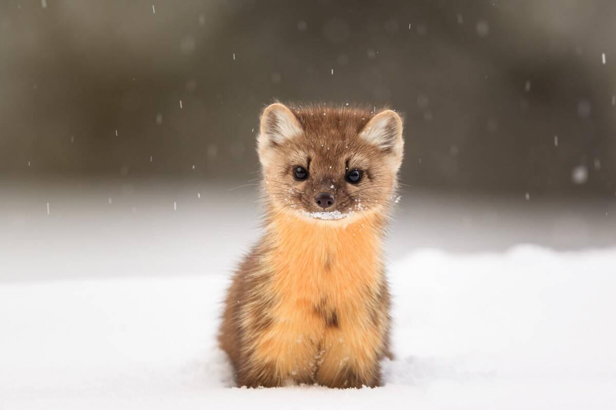 10 absolutnie urzekających i uroczych zwierzaków. Zdobędą twoje serce, gdy tylko je zobaczysz