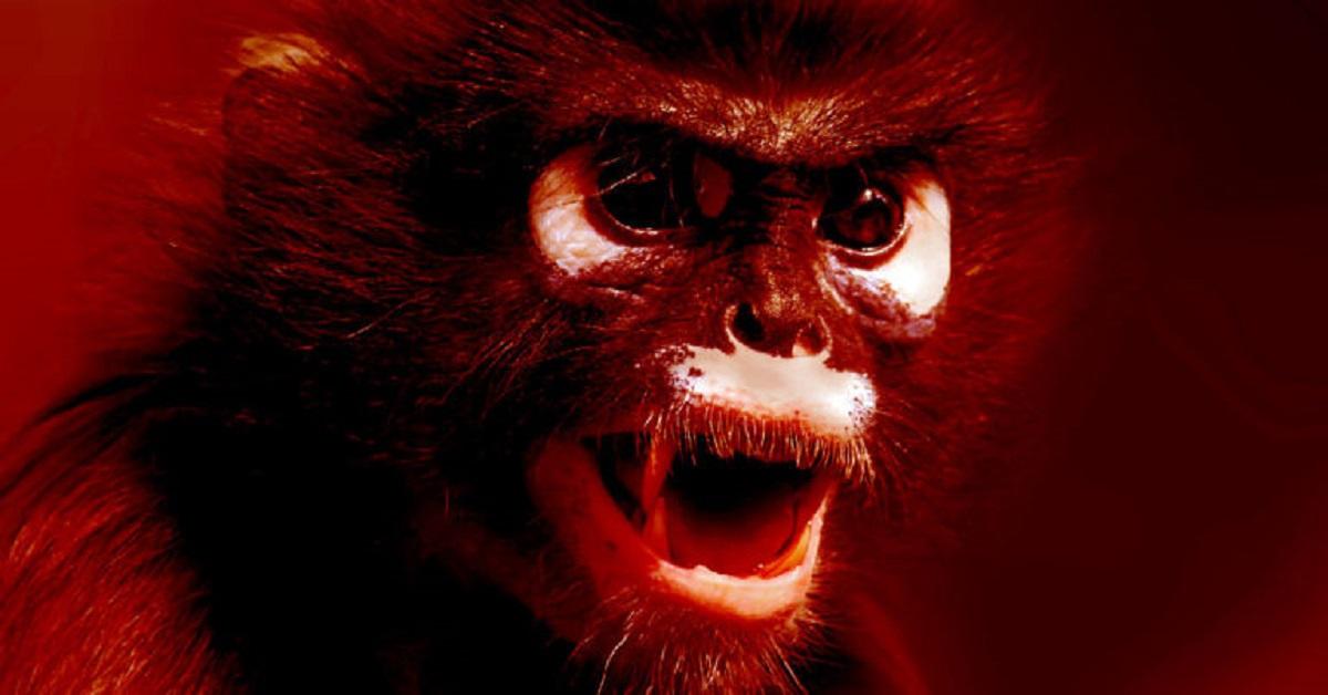 Małpi gang napadł na pracownika służby zdrowia i ukradł próbki pacjentów z podejrzeniem COVID-19