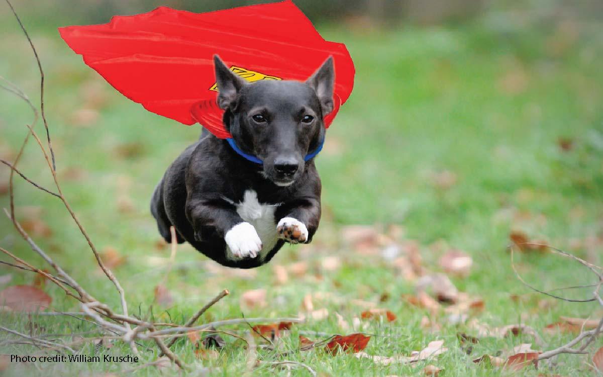 Twój pies naprawdę próbuje cię ocalić, tylko nie ma zielonego pojęcia jak to zrobić