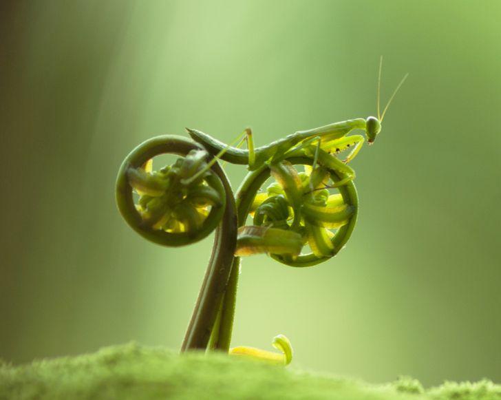 20 urokliwych zdjęć, które dowodzą, że natura zawsze ma nam coś do pokazania