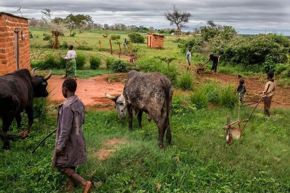 Dlaczego większość epidemii rozpoczyna się w Azji i Afryce i dlaczego należy spodziewać się kolejnych?