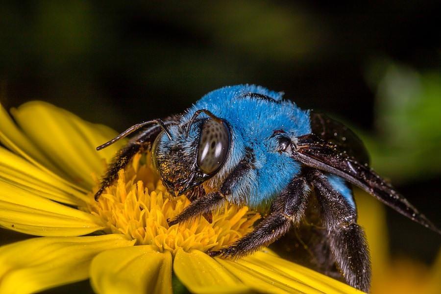 18 zdjęć, które udowadniają, że w kwestii kolorów i kształtów kreatywność natury nie zna granic