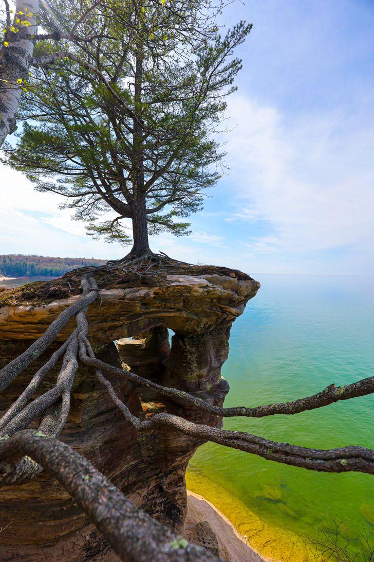 19 zdumiewających zdjęć, które ukazują potęgę natury. Jej siła woli jest nieprawdopodobna