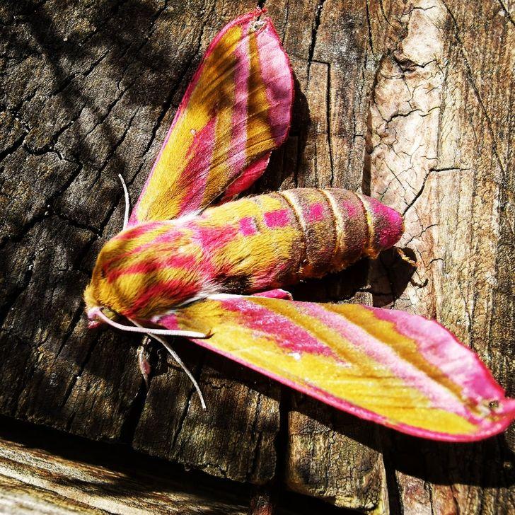 15 hipnotyzujących zdjęć, które pokazują, że naturę też może ponieść fantazja