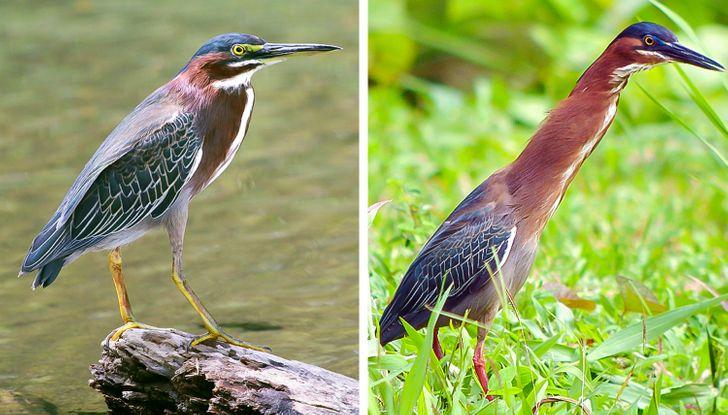 17 barwnych przykładów, że Matka Natura nie przestanie nas zaskakiwać