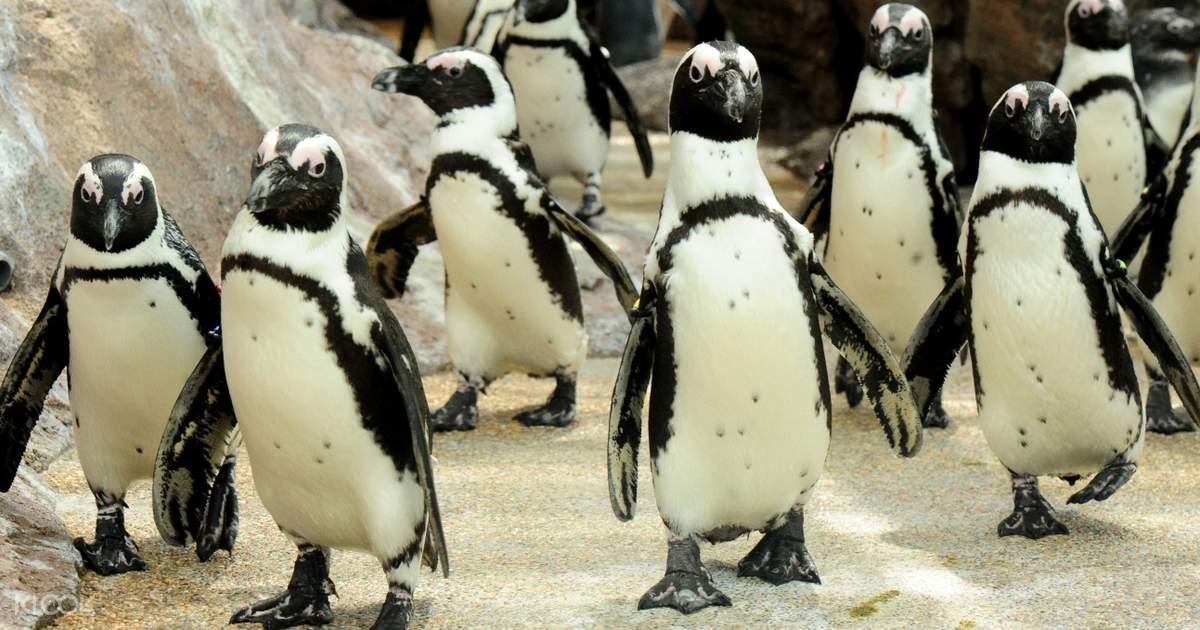 Akwarium w Kioto stworzyło tablicę prezentującą skomplikowane związki między pingwinami