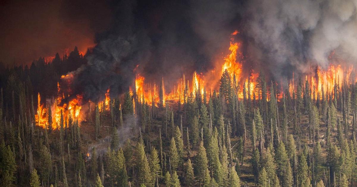 Lasy na Syberii znowu płoną. To jedne z najgorszych pożarów zaobserwowanych w ciągu ostatnich lat